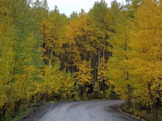 Seasons Fall Autumn Aspen Colorado